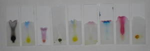 Chromatography plates showing the chromatography of natural paint and food dye - Packhorse Pub 2014